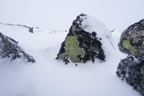 I Norge er lav allestedsværende, og vi kan med rette kalle oss et ekte lav-land med nærmere 2000 registrerte arter av de 16 000 som vi vet finnes i verden. I tillegg finnes det helt sikkert veldig mange arter som fremdeles ikke er registrert/ oppdaget enda. Men hva vet vi egentlig om lav?